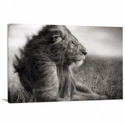 Quadro Leão decorativo em Preto e Branco