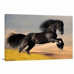 Quadro decorativo Cavalo Preto Pulando Para Sala Quarto Escritório